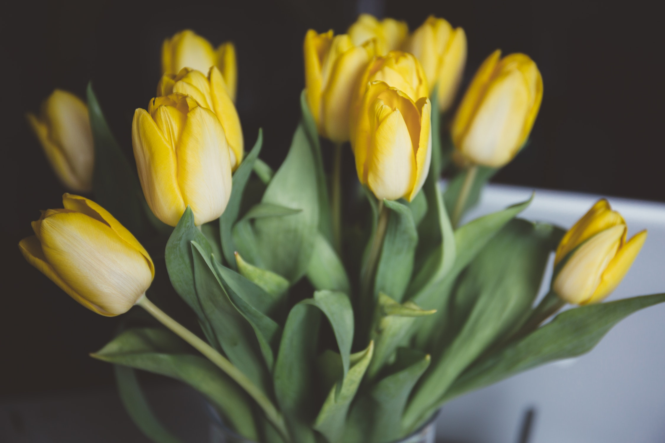 "Bouquet of yellow tulips – saying ""sorry"" in Polish"